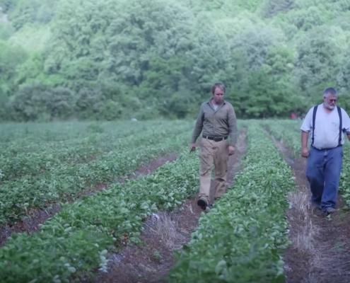 Ingles Markets: Darnell Farms video