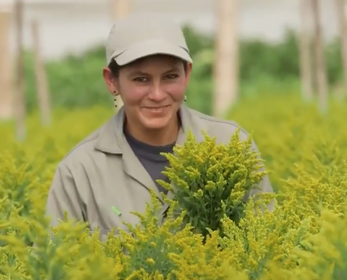 Sunshine Bouquet Company Overview video